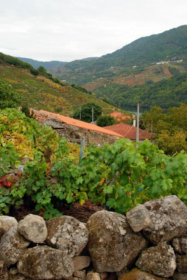 Vineyards in Galicia, Spain