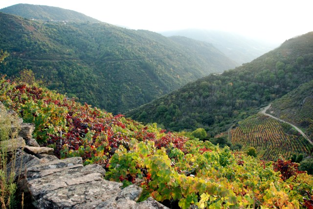 Vineyards in the Sil Canyons